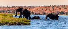 DreamTrips ~ Wildlife Encounters in Botswana -  Kasane, North West, Botswana