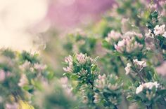 blur buds by mrs. french, via Flickr