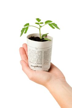 Why buy seed starters when used coffe cups are perfect! #sustainability