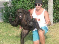 Chimp gives the finger!