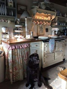 cottage kitchen with beautiful doggie