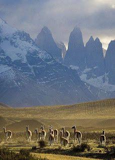 Amazing World Life - Llamas & mountains