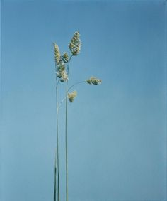 Hyperreal oil paintings by christoph eberle Hyperrealistic Art, Oil On Canvas, Grass, Dandelion, Contemporary Art, Amazing, Nature, Flowers, Plants