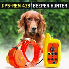 Nyakörv vadászkutyáknak tervezve #kutya #nyakörv #vadász #vadászat #vadászkutya #hunter #hunting Dogs, Animals, Animales, Animaux, Pet Dogs, Doggies, Animal, Animais