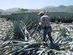 Tequila tasting tour | Puerto Vallarta | Mexico