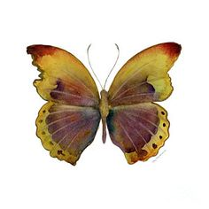 Painting - 84 Gold-banded Glider Butterfly by Amy Kirkpatrick