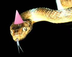 snake hat - Google Search