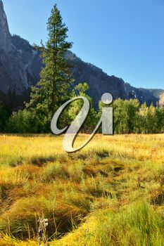 iCLIPART - Magnificent glade with a yellow grass in valley Yosemite park. October, early morning