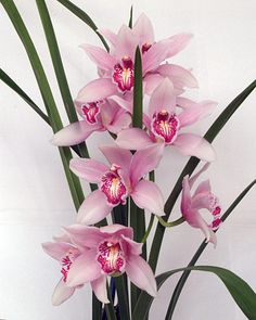 Orchids ~ Garden and Flowers