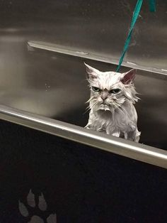My friend is a pet groomer and had a very angry customer.