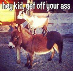 Get Off Your Ass