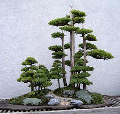 Image from http://backyardideas.biz/wp-content/uploads/2014/02/bonsai-tree-trimming.jpg.