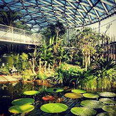 Shinjuku Gyoen Botanical Garden
