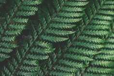 Large fern leaves closeup by René Jordaan Photography on Photography For Sale, Creative Photography, Business Illustration, Lush Green, Watercolor Cards, Business Card Logo, Nature Photos, Ferns, Painting & Drawing