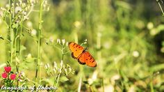 the most beautiful butterflies for you /Two butterfly species