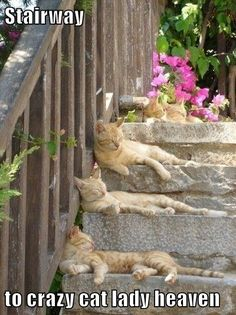 Stairway to crazy cat lady heaven http://ibeebz.com