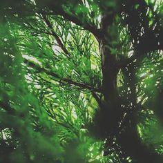 Home Plant Leaves, Graphic Design, Website, Plants, Photography, Photograph, Fotografie, Photoshoot, Plant