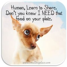 Having Problems with a Dog that Begs? Learn more at www.smalldogplace.com/begging-dog.html