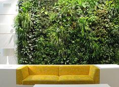 8 Benefícios do paredes verdes