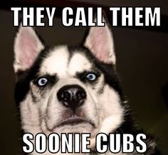Soonie pups: I want one.