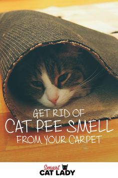 26 exciting cat pee smell images cat supplies cats kitty rh pinterest com