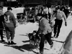 Sled Dogs Video: Chinook's Children - Circa 1940's - CharlieDeanArchives     http://youtu.be/qFnDas6-9_I