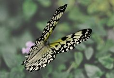 Get Ready for your Close-Up by Jessica Kennedy - Animals Insects & Spiders ( butterfly, nature, monarch, yellow, minimalist, black )