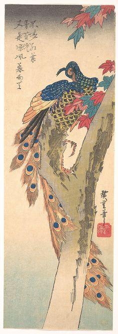 Utagawa Hiroshige | Peacock Perched on a Maple Tree in Autumn | ca. 1833 | Japan