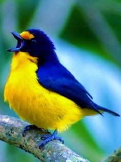 Beautiful colours Best Picture For two Birds Photography For Your Taste You are looking for somethin All Birds, Cute Birds, Pretty Birds, Little Birds, Beautiful Creatures, Animals Beautiful, Cute Animals, Exotic Birds, Colorful Birds