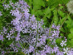 Wabash Wildflowers #2