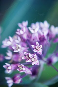 Small Purple Flowers - Nature