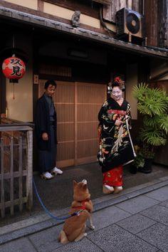 Mamefuji saying goodbye to Nishimura okiya dog Chiro