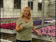 Optimara Nashville African Violet Production Facility ~ Oh I really wanted to go to the convention (2014) especially since my daughter lives nearby.