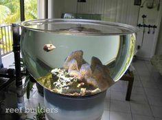 Beautiful idea for a reef tank Marine Aquarium, Reef Aquarium, Saltwater Aquarium, Aquarium Fish Tank, Aquarium Ideas, Betta Fish Tank, Fish Tanks, Beta Fish, Fisher