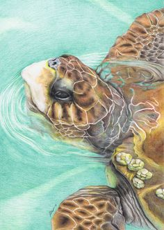 Turtle (colored pencil) by fatboygotsick.deviantart.com on @deviantART