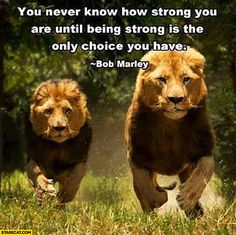 You never know how strong you are until being strong is the only choice you have Bob Marley quote LOVE the quote & these magnificent animals!