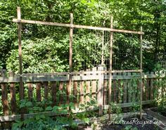 , How to Build a Gardening Trellis DIY tutorial trellis for beans and peas plus 9 pieces. , How to Build a Gardening Trellis DIY tutorial trellis for beans and peas plus 9 pieces Bean Trellis, Grape Trellis, Bamboo Trellis, Diy Trellis, Trellis Ideas, Diy Pergola, Outdoor Pergola, Cheap Pergola, Pergola Shade