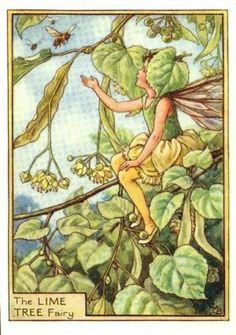 Lime Tree Flower Fairy Print c.1950 Fairies by Cicely Mary Barker