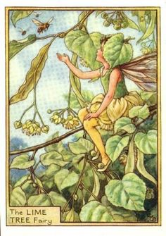 Lime Tree Flower Fairy Print c.1950 Fairies by Cicely Mary Barker