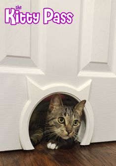 The Kitty Pass Interior Cat Door Hidden Litter Box Pet Door for cats up to 21 lbs Details can be found by clicking on the image. (This is an affiliate link) Hidden Litter Boxes, Animal Gato, Dog Area, Pet Door, Photo Chat, Cat Room, Unique Cats, Unusual Pets, Cat Furniture