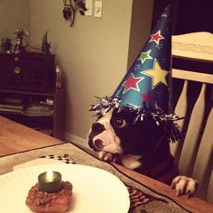 Tater the birthday boy!