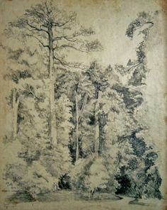 Goh Ee Choo- early Botanic garden, Singapore, 1980 pencil on paper