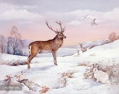 PortForLio - Stag, Red Deer and Mountain Hare