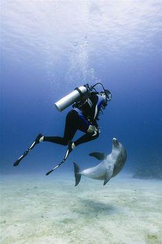 Dolphin Dive - Anthony's Key Resort - Roatan - Honduras I have done this here! Woo Hoo!