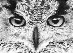 Pencil Drawing | Birds | Horned Owl IV