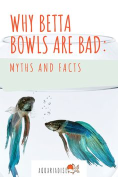 """Betta bowls, vases and tiny """"aquariums"""" are still sold on a large scale, which means many unfortunate bettas die a premature death due to bad housing. Keep reading to see some of the most common betta myths smashed and find out just why a bowl, vase or very small tank is not enough to keep your betta healthy."""