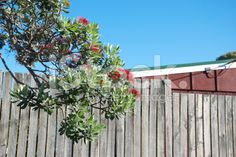 A typical New Zealand Small Town Backyard scene. The palisade fence,. Palisade Fence, Royalty Free Images, Royalty Free Stock Photos, Kiwiana, Summer Photos, Image Now, Small Towns, New Zealand, Scene