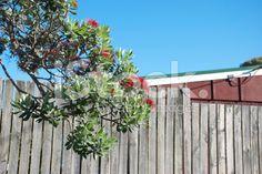Kiwiana Backyard in Summer royalty-free stock photo