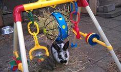 Konijnen en hamsters - konijnenspeelgoed