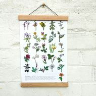A4 print featuring a flower A to Z - each flower was digitally illustrated separately before being put into the design. Perfect for framing, this print is good as a gift or a treat for yourself! English Gifts, Egg Designs, Paper Ship, Flower Prints, Ladder Decor, Gift Guide, A4, Illustration, Frame